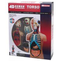 4D HUMAN ANATOMY-SMALL TORSO