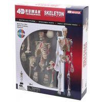 4D HUMAN ANATOMY-HUMAN SKELETON